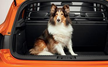 En Collie sitter i bagageutrymmet på en orange Renault